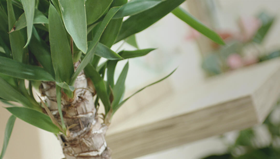 店内観葉植物の写真